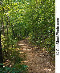 Hiking Trail - A hiking trail through the woods during the...
