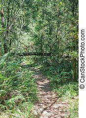 Hiking trail at Jubilee Creek picnic spot