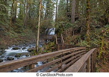 Hiking Trail at McDowell Creek Falls