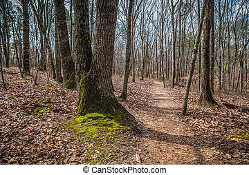 Hiking trail in a forest