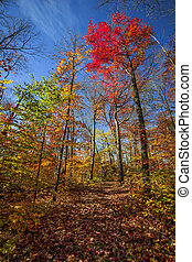 Hiking trail in fall forest