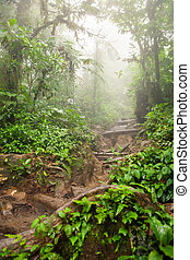 Hiking trail in lush rainforest