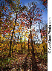 Hiking trail in sunny fall forest