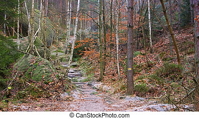 Hiking trail in the Elbe sandstone mountains