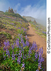 hiking trail in the mountains - mountain meadow on a hiking...