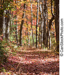 Hiking Trail in Tunnel of Trees in the Fall