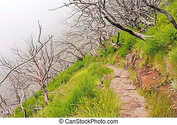 Hiking trail passage Pico Arieiro to Pico Ruivo - burned trees along the path
