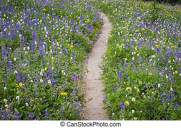 Hiking trail through field of wildflowers
