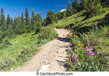 Hiking Trail through field of wildflowers in Colorado