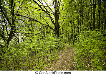 Hiking trail through green trees in beautiful forest