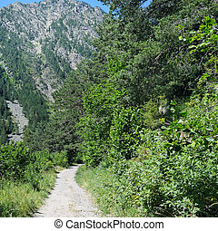 hiking trail through the forest slopes of mountains in summer sunlight