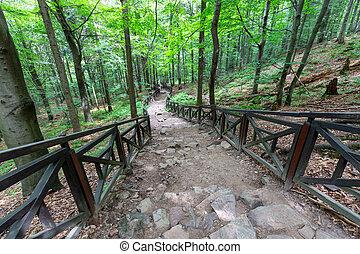 Hiking trail to Lysica in the Swietokrzyskie Mountains in Poland