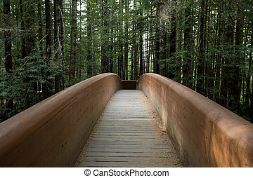 Lady Bird Johnson Grove Trail in California Redwoods National Pa