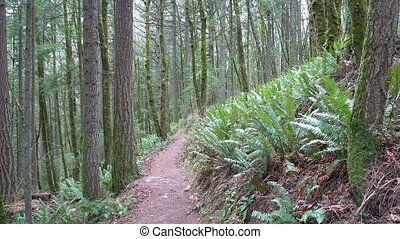 Hiking trails in outdoor forest in Portland OR one breezy...