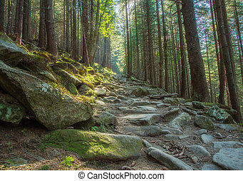 Hiking trails through giant redwoods