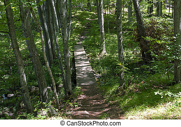 Hiking trails with a bridge in the forest