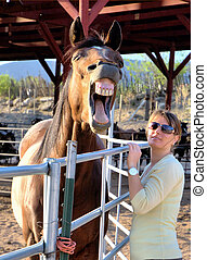 Hilarious! - Laughing horse showing teeth
