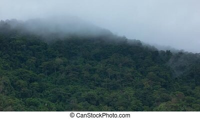 Hill covered with rainforest and rain clouds - timelapse....