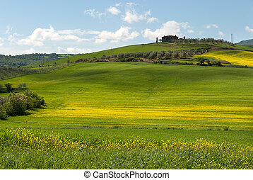 hill in Tuscany