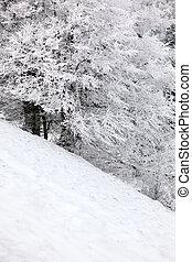 Hill in winter