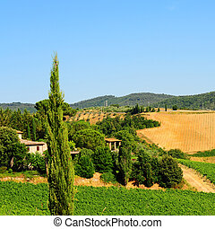 Chianti  - Hill of Tuscany with Vineyard in the Chianti ...