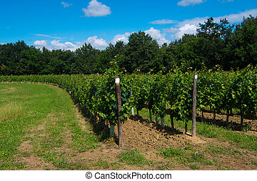 hill planted with circular vineyard - vineyard arranged in a...