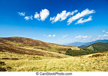 hill side meadow in summer - early autumn mountain landscape...