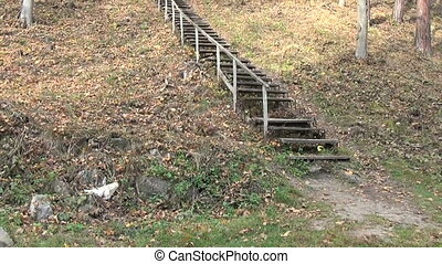 hill stair tree autumn