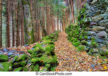 Hill trail in a forest of autumn leaves