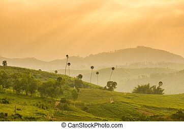 Hill with golden sunlight in the morning