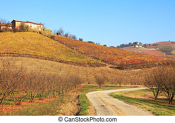Hills and vineyards of Piedmont at fall. Northern Italy.