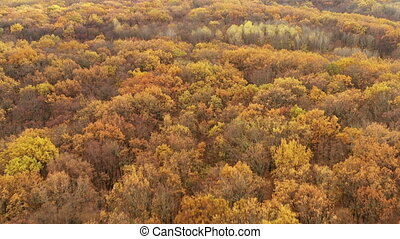 Drone tilt reveal shot of hills covered with forest with yellow autumn foliage - Forest autumn relief landscape on hill.