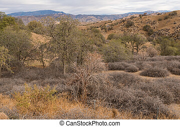 Dry parched hills near Caliente and Tehachapi, California