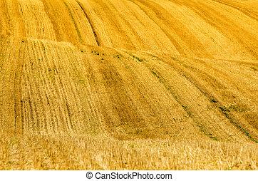 hills in the wheat fields