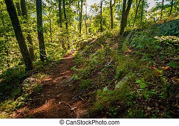 Hills Mountain Trail