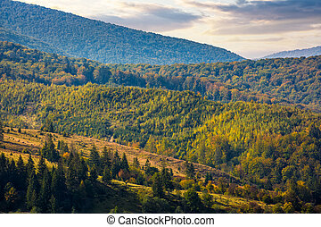 hills of mountain range with forest in autumn. beautiful...