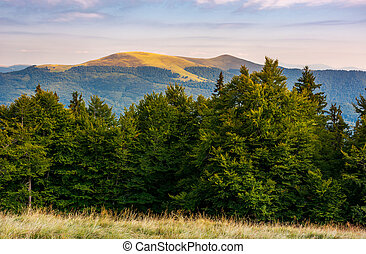 hills of Svydovets ridge behind the beech forest. lovely...