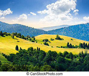 hills with meadow among mountains  forest at sunrise