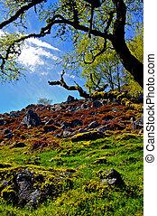 hillside - Hillside in the highlands, scotland, may 2005