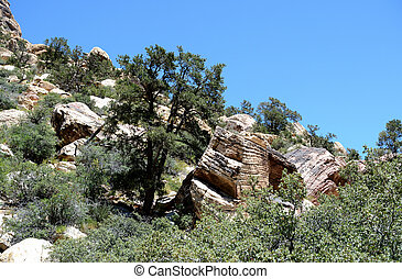 Hillside in Red Rock Canyon, Nevada