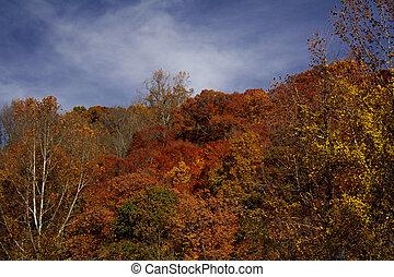 Hillside In The Fall
