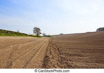 hillside potato rows