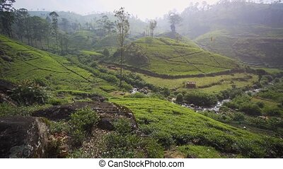 Hillside Tea Plantation in Nuwara Eliya, Sri Lanka - Tea...