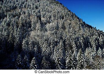 Hillside trees in winter