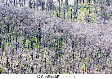 Hillside with bare trees at spring time