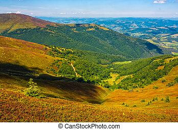 hillside with forest on weathered grassy slope - hillside...
