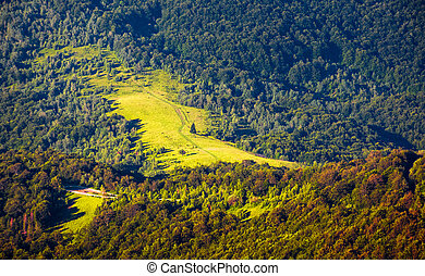 hillside with glade in mixed forest. beautiful nature...