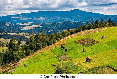 hillside with row of haystacks on rural field. beautiful...