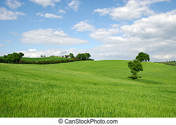 hilly countryside in grosseto in tuscany