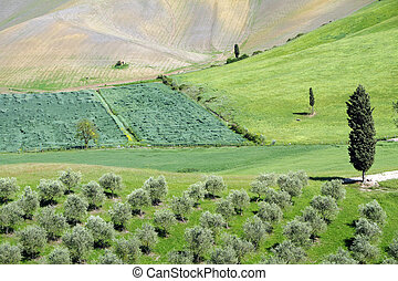 hilly green tuscan landscape in spring with cypresses and olive trees, Tuscany, Italy, Europe